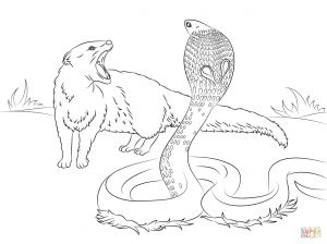 100 Coloring Pages - New Cobra Vs Mongoose Coloring Page 15p