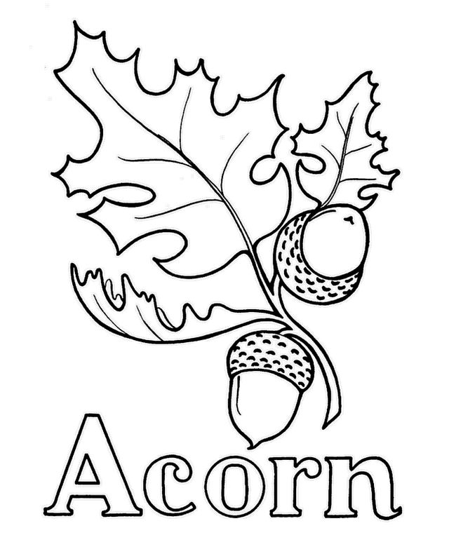 Acorn And Leaf Coloring Sheet Printable Acorn Coloring Page
