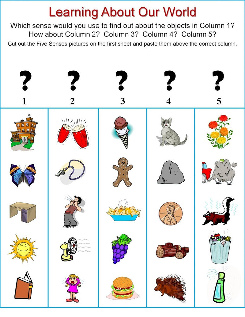 Activities For 5 Senses Fun