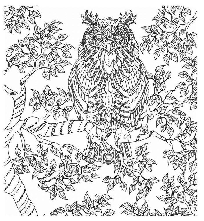 Adorable Owls Coloring Page