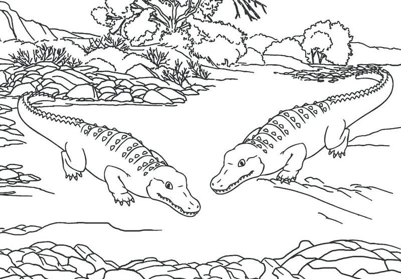 Alligators Zoo Animals Coloring Pages