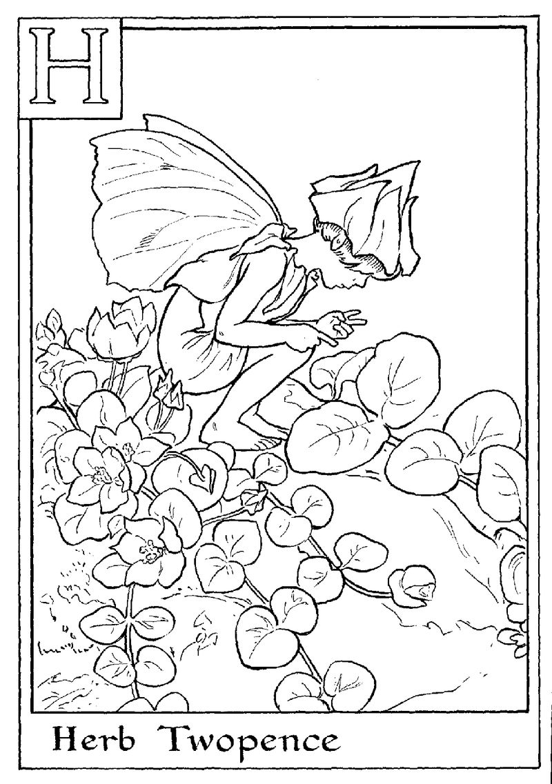 Alphabet Fairy Herb Coloring Pages