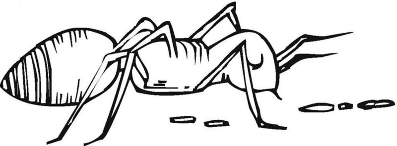 Ant Pictures Coloring Pages