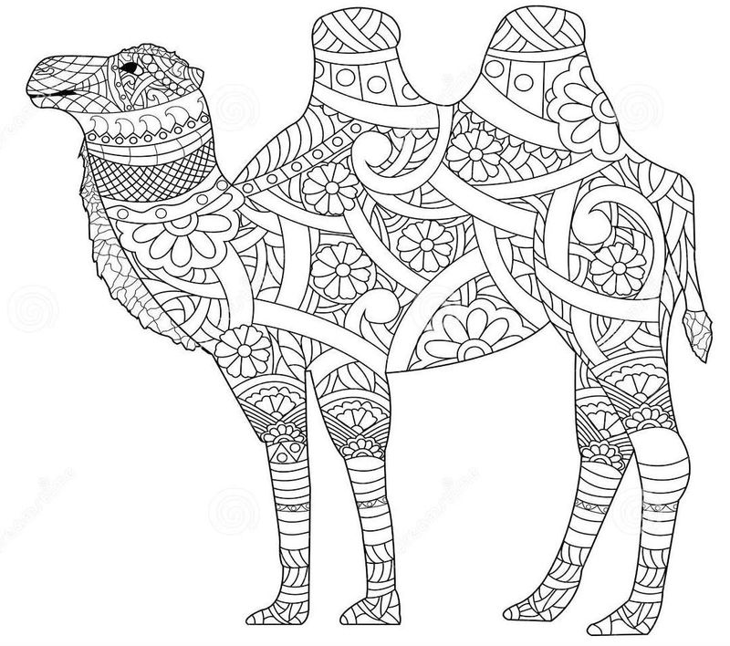 Anti Stress Adult Zentangle Camel Coloring Page