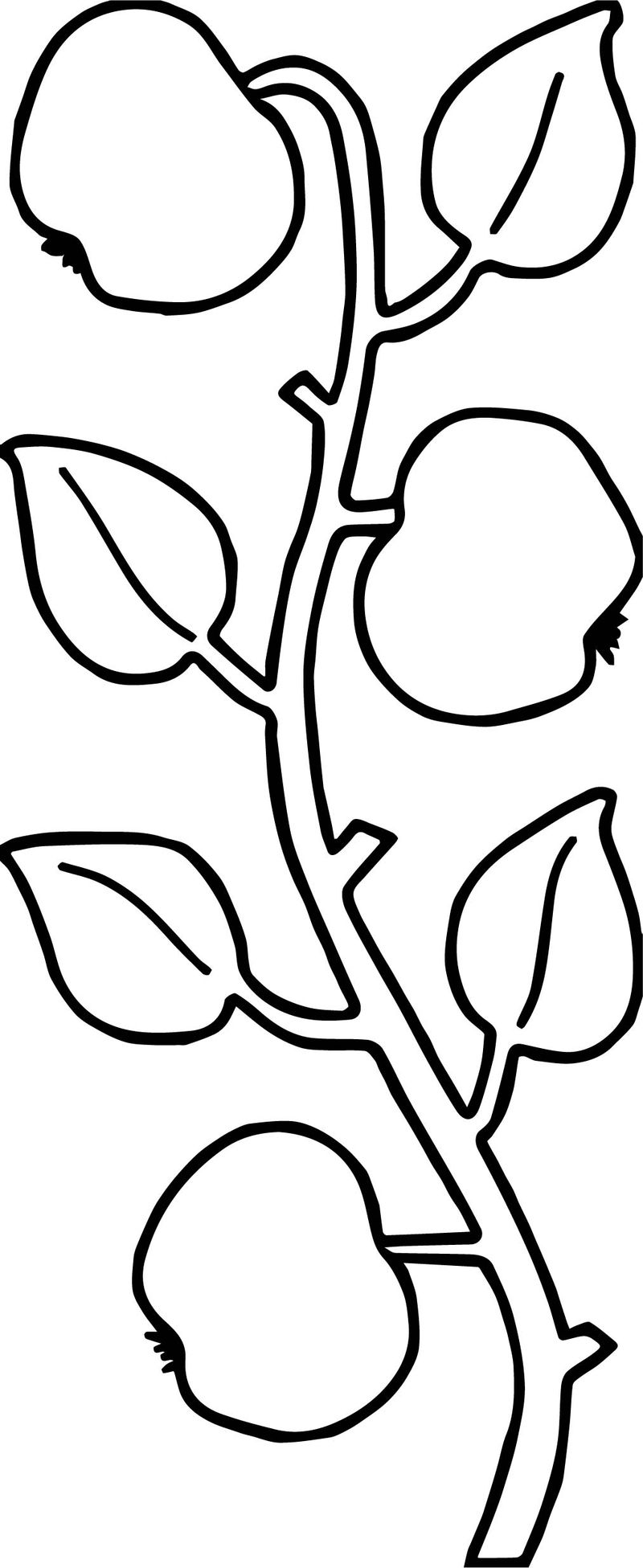 Apple tree ivy coloring page