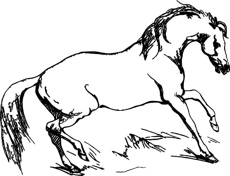 Arabian Horse Fiesty Coloring Page
