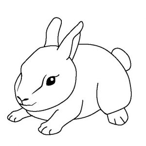 Baby animal coloring pages bunny