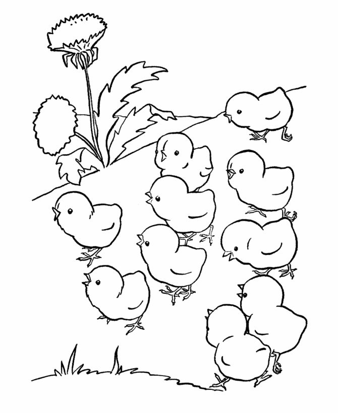 Baby Chicks Coloring Page 1