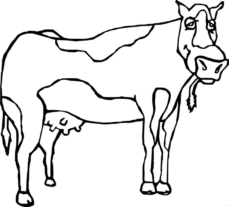 Baby Farm Animal Cow Coloring Page