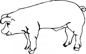 Baby farm animal pig coloring page