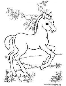Baby horse coloring page free