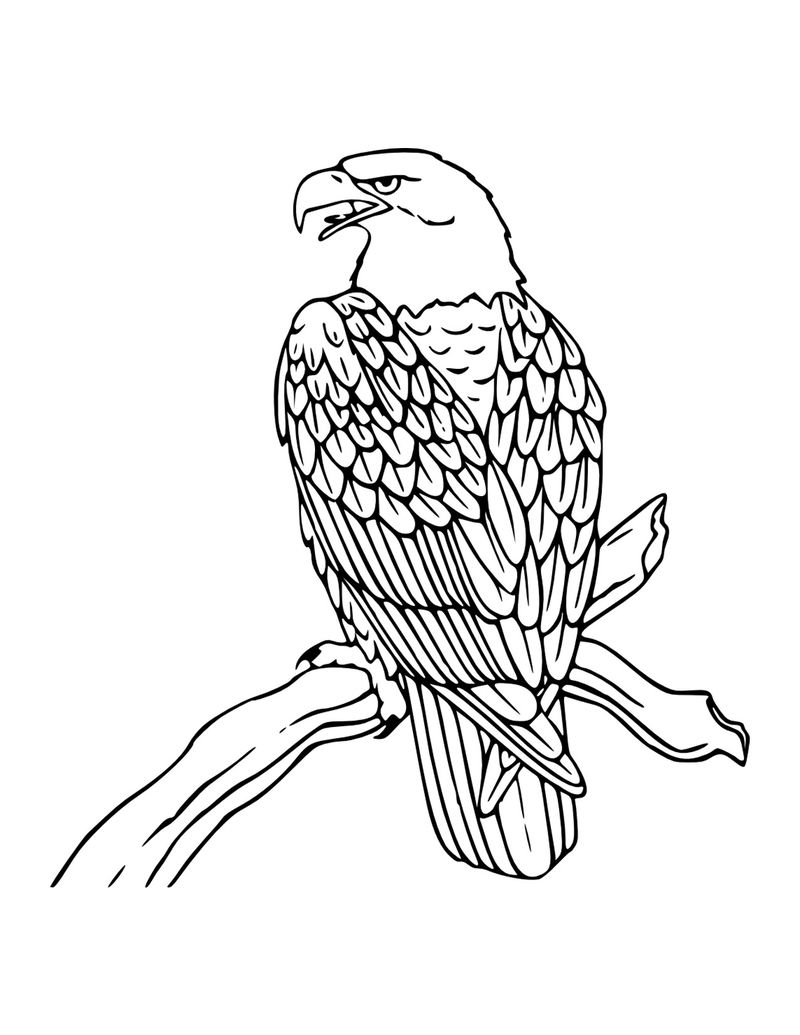 Bald Eagle Coloring Pages For Kids