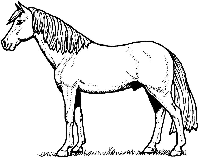 Big Pony Coloring Pages