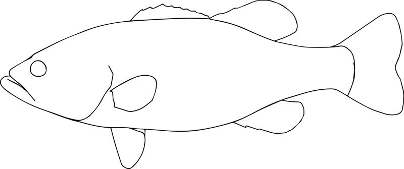 Blackbass0 Fish Coloring Page