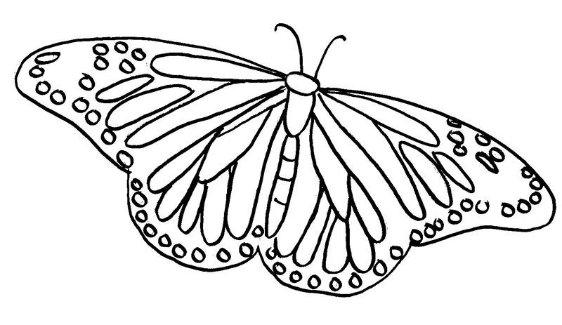 Butterfly Coloring Pages For Adults 001