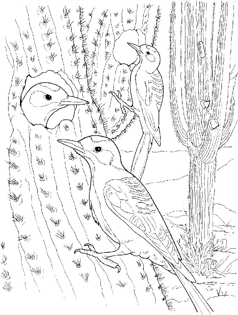 Cactus Coloring Pages For Kids 001
