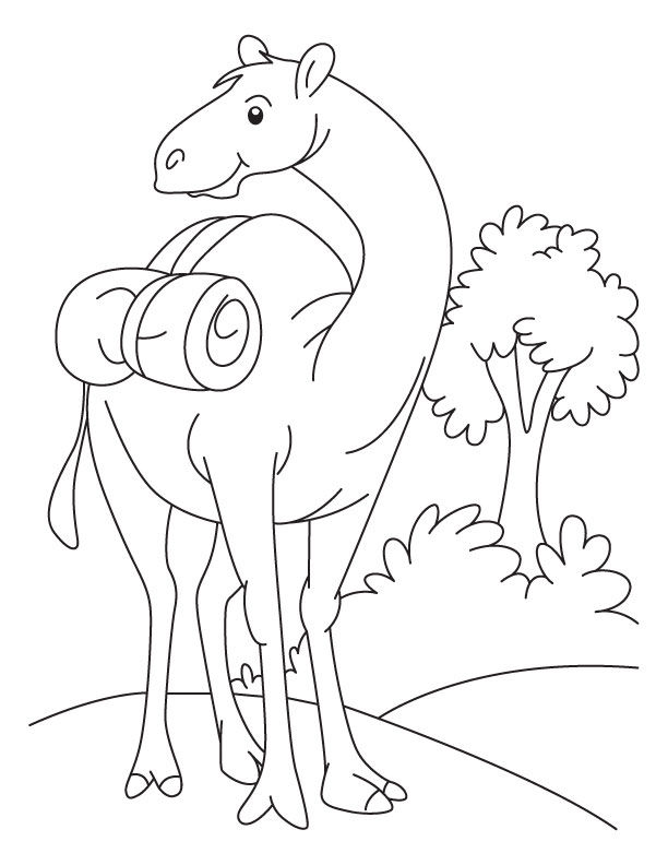 Cartoon Camel Coloring Pages