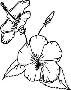Cartoon flowers china rose coloring page