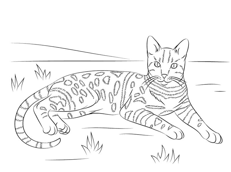 Cat Coloring Page Easy Adult