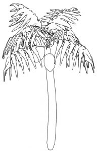 Ceco tree coloring page