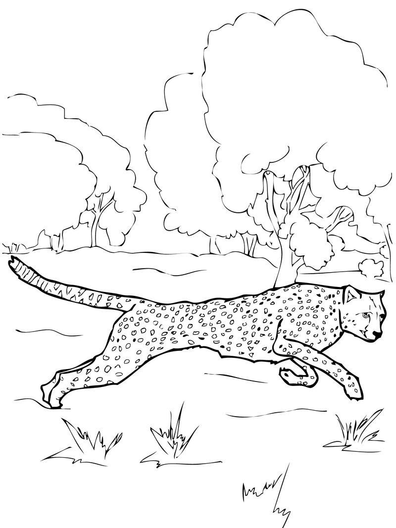 Cheetah Coloring Pages For Kids