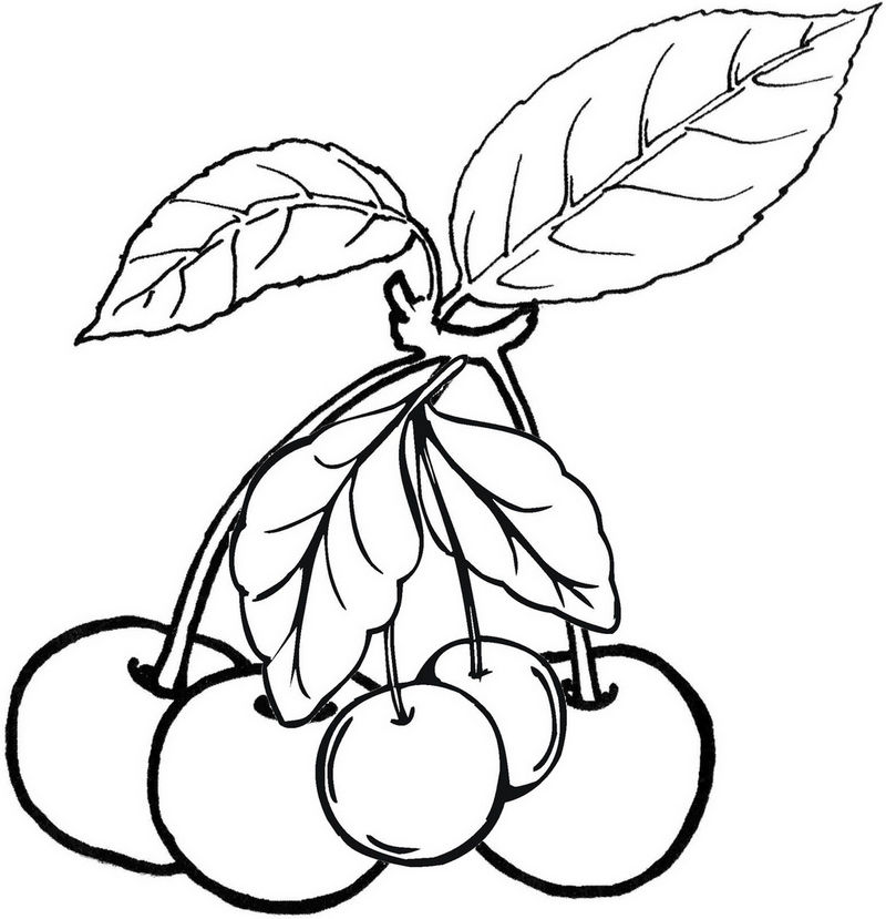 Cherries Fruit Coloring Pages