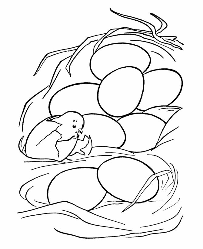 Chick And Eggs Coloring Page