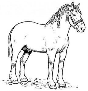 Color pages of horses easy