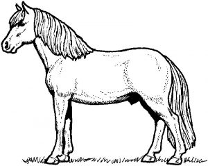 Coloring page of a horse
