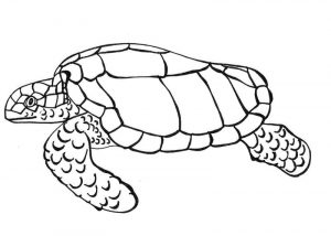 Coloring page of a turtle