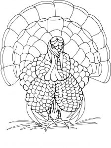 Coloring page of turkey