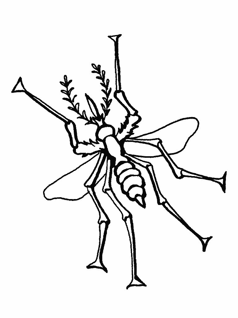 Coloring Pages Of Bugs For Kids