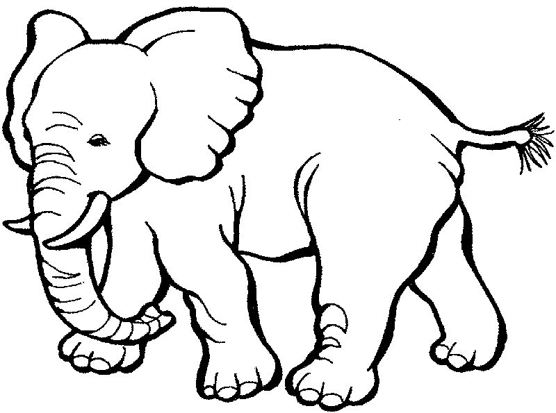 Coloring Pages Of Elephants For Kids
