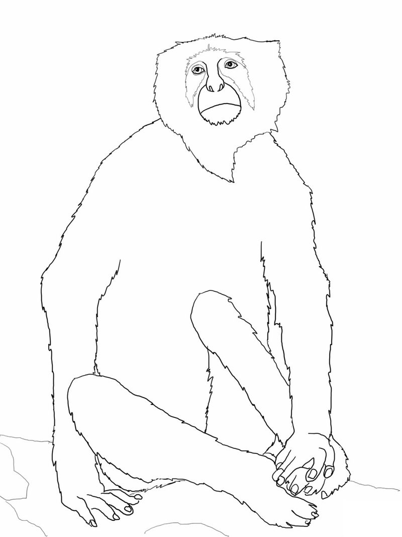 Coloring Pages Of Monkeys For Kids