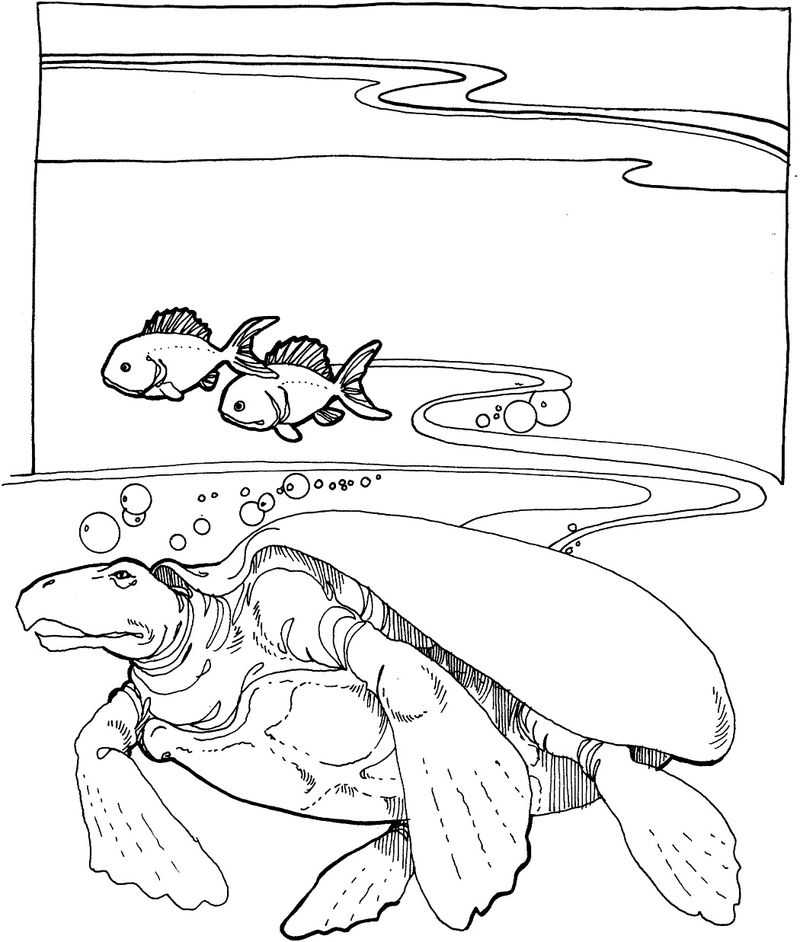 Coloring Pages Of Sea Turtles 001