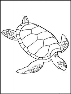 Coloring pages turtles
