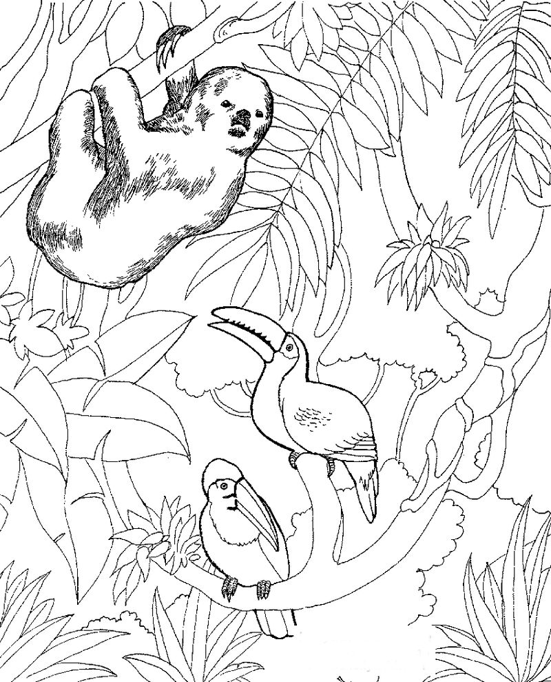 Coloring Pages Zoo Animals