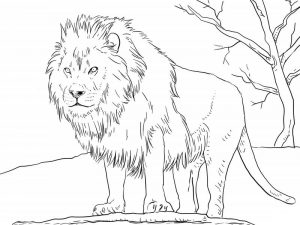 Coloring pictures of animals lion page 001