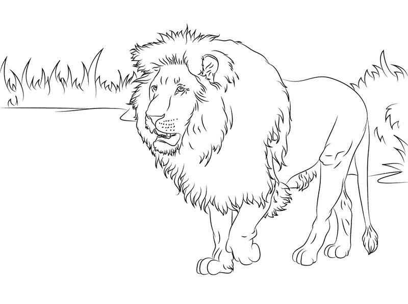 Coloring Pictures Of Animals Lion Printable 001