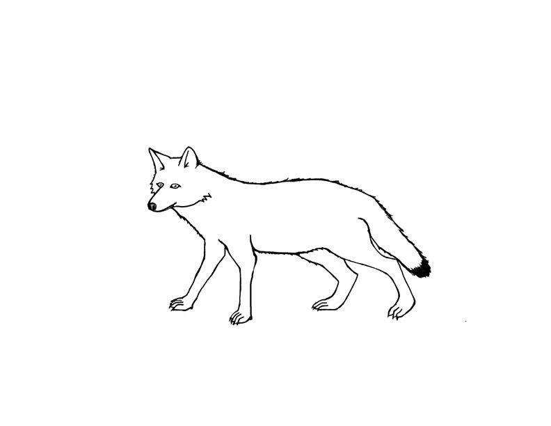 Coyote Coloring Pages For Kids