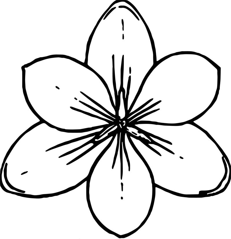 Crocus Flower Top View Coloring Page