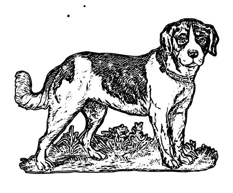 Dog Coloring Pages 079