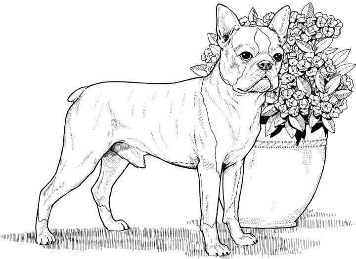 Dog Coloring Pages For Adults Realistic
