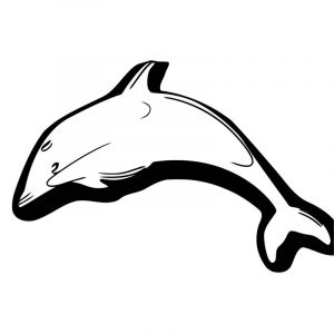 Dolphin coloring page 040