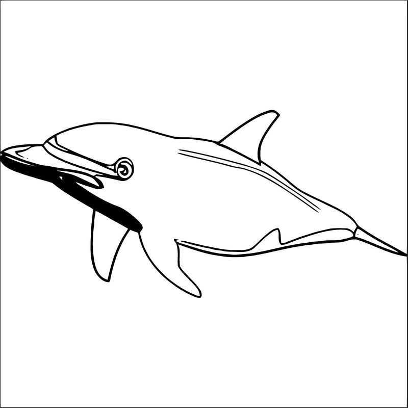 Dolphin Coloring Page 051