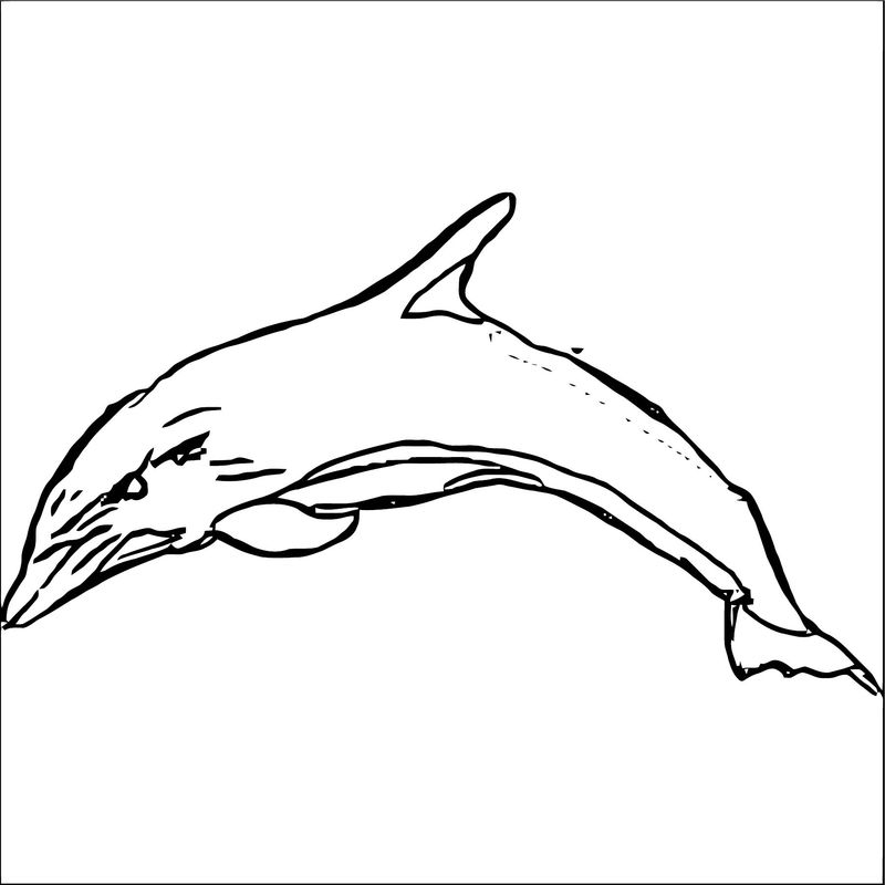 Dolphin Coloring Page 056