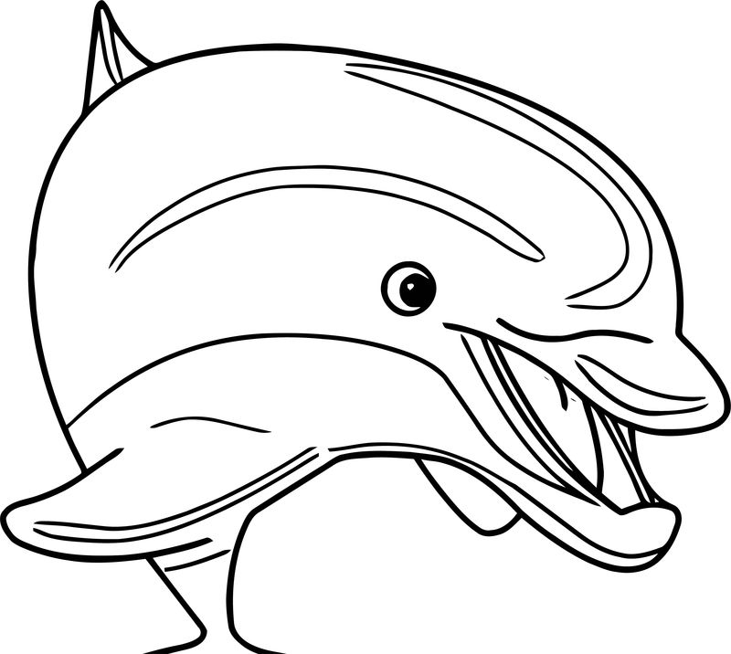 Dolphin Coloring Page 095