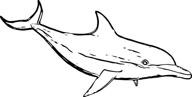 Dolphin Coloring Page 097