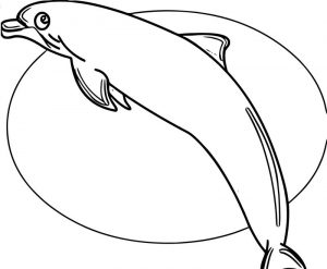 Dolphin coloring page 101