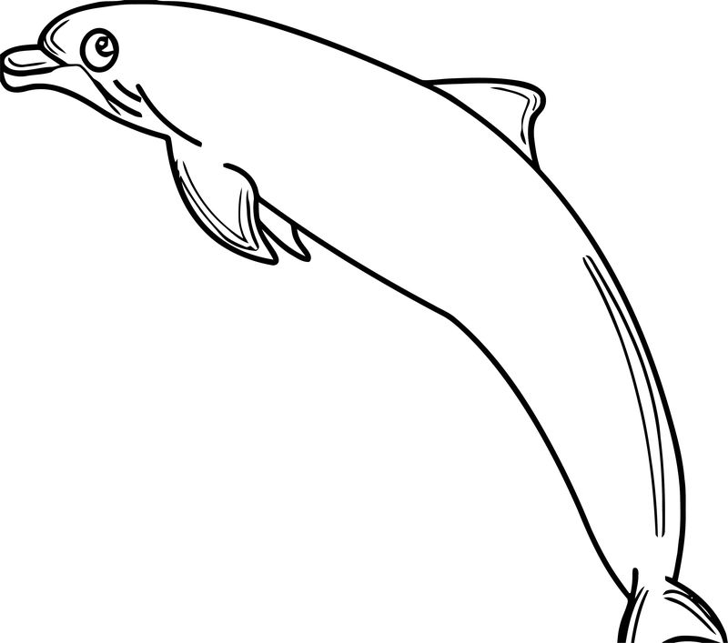Dolphin Coloring Page 103